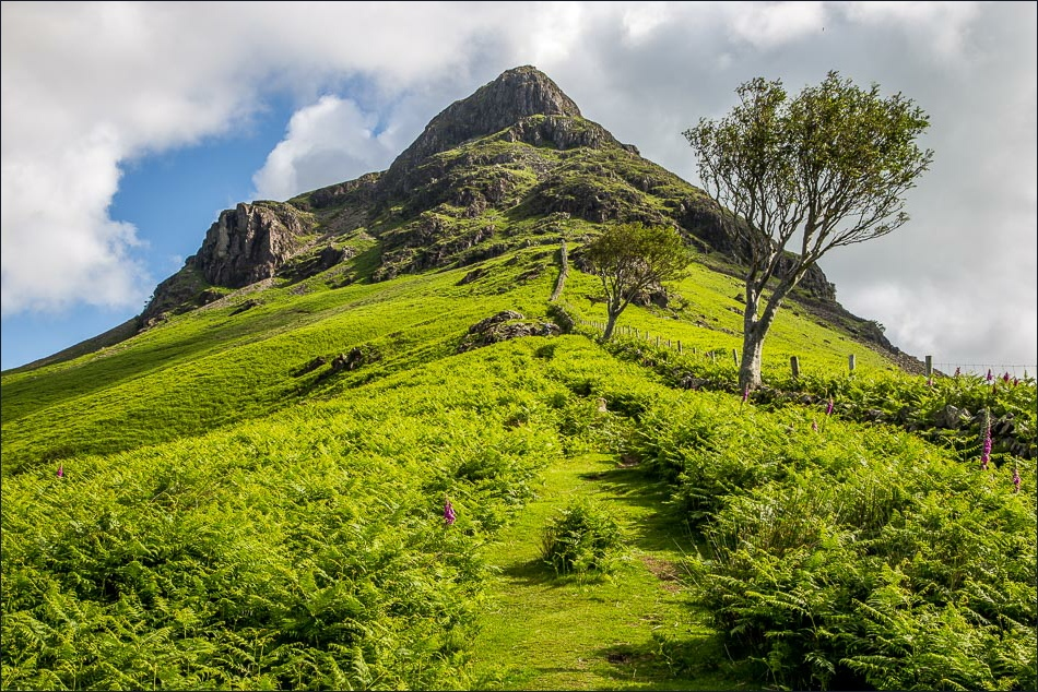 View up Yewbarrow with lush green bracken and sparse trees