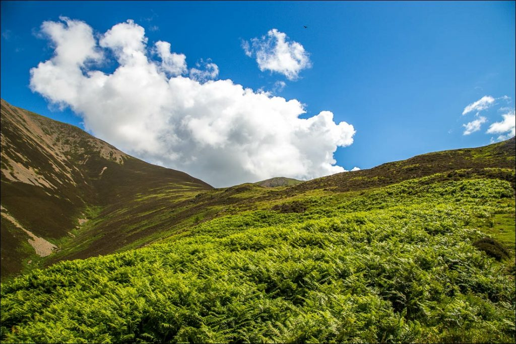 Views up Lad Hows toward Grasmoor with lush green bracken on the fellside.