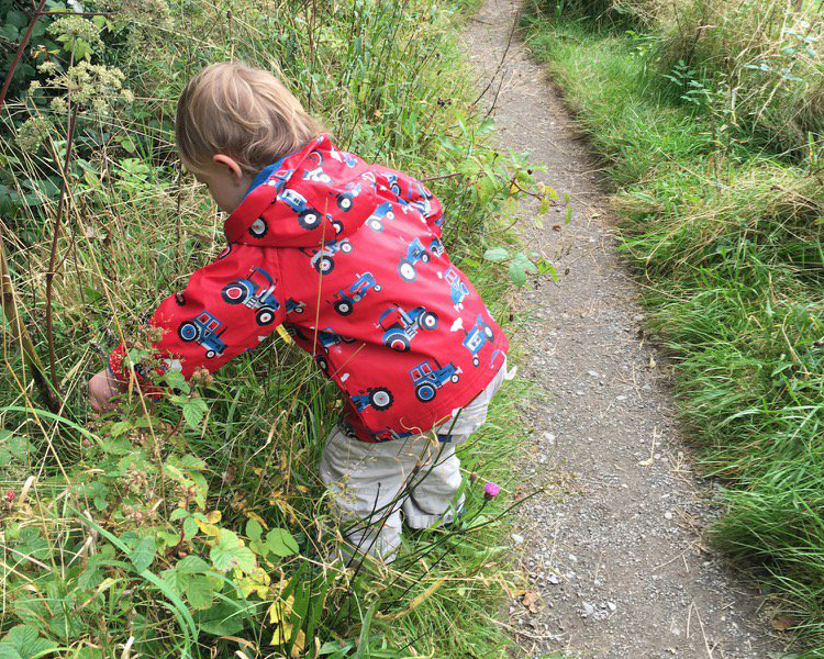 Little boy foraging for Brambles in the Borrowdale Valley