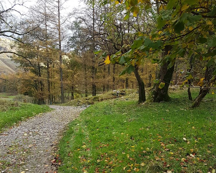 Borrowdale walk in Autumn starting out to Galleny Force