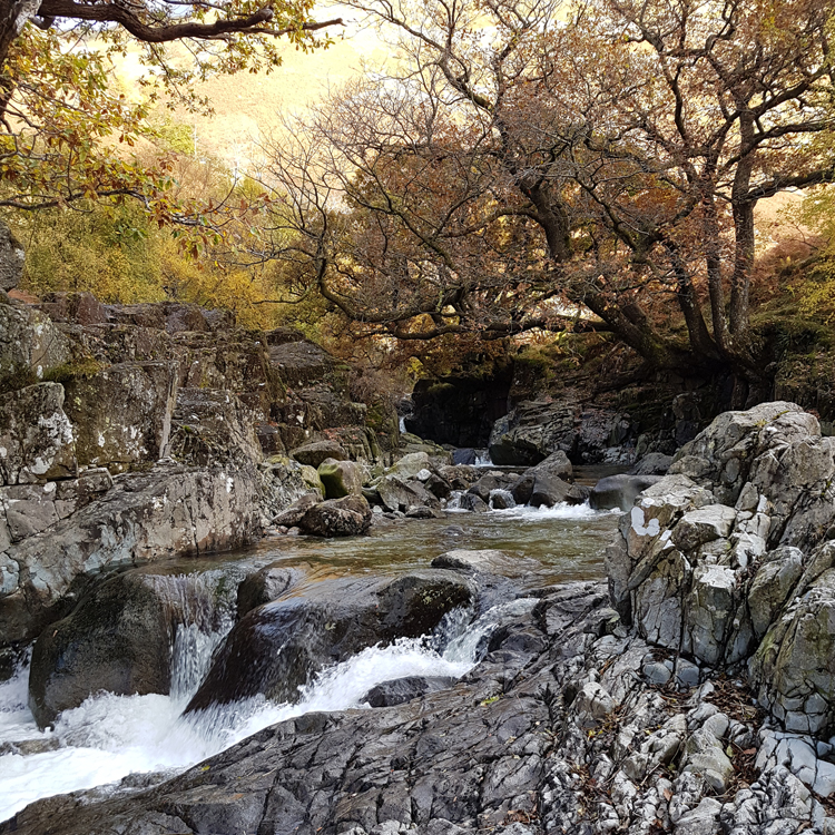 A Borrowdale walk to Galleny force. Overlooking the waterfall.